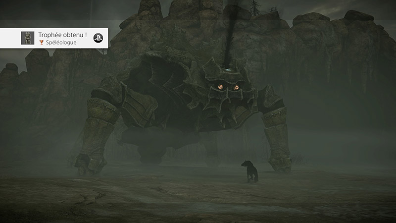 avis shadow of the colossus